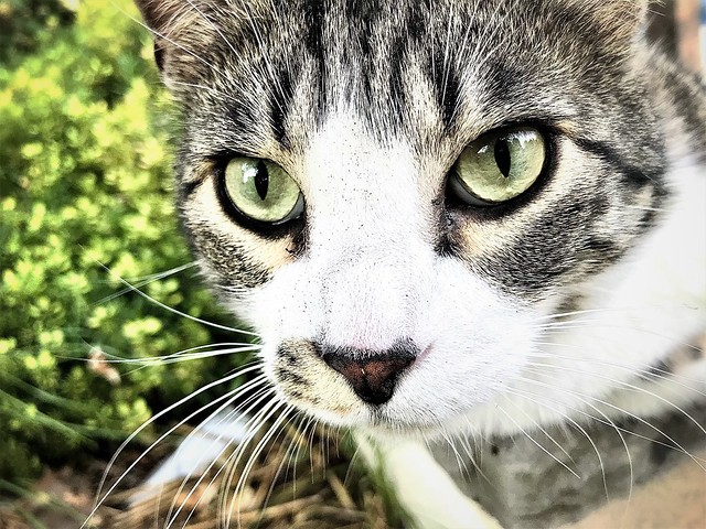 Crystal Eyes of the Cat