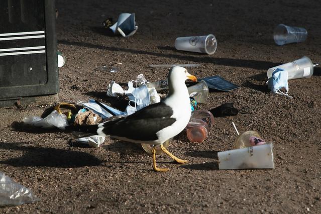 Plastic, plastic, pastic