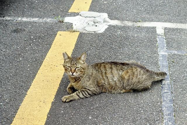 Today's Cat@2021−06−23
