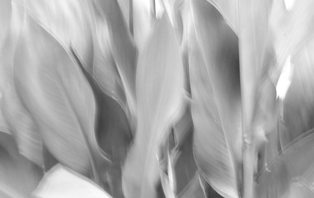 Intentional motion of the wind