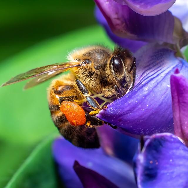 Bee 🐝🍯