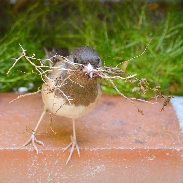 Let's build a nest