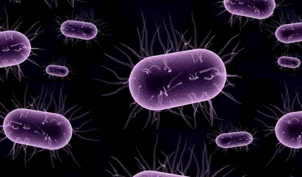 Les microorganismes provoqueraient un vieillissement prématuré