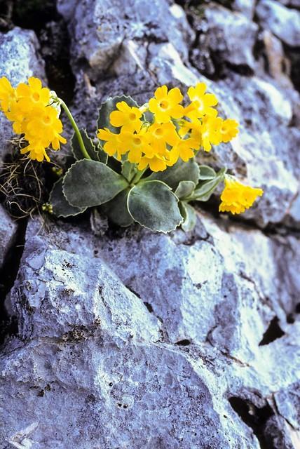 On sunny rocks