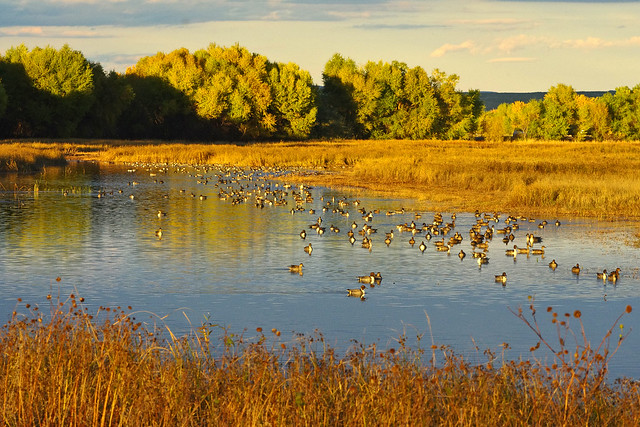 Evening at Bosque del Apache National Wildlife Refuge, New Mexico, USA.