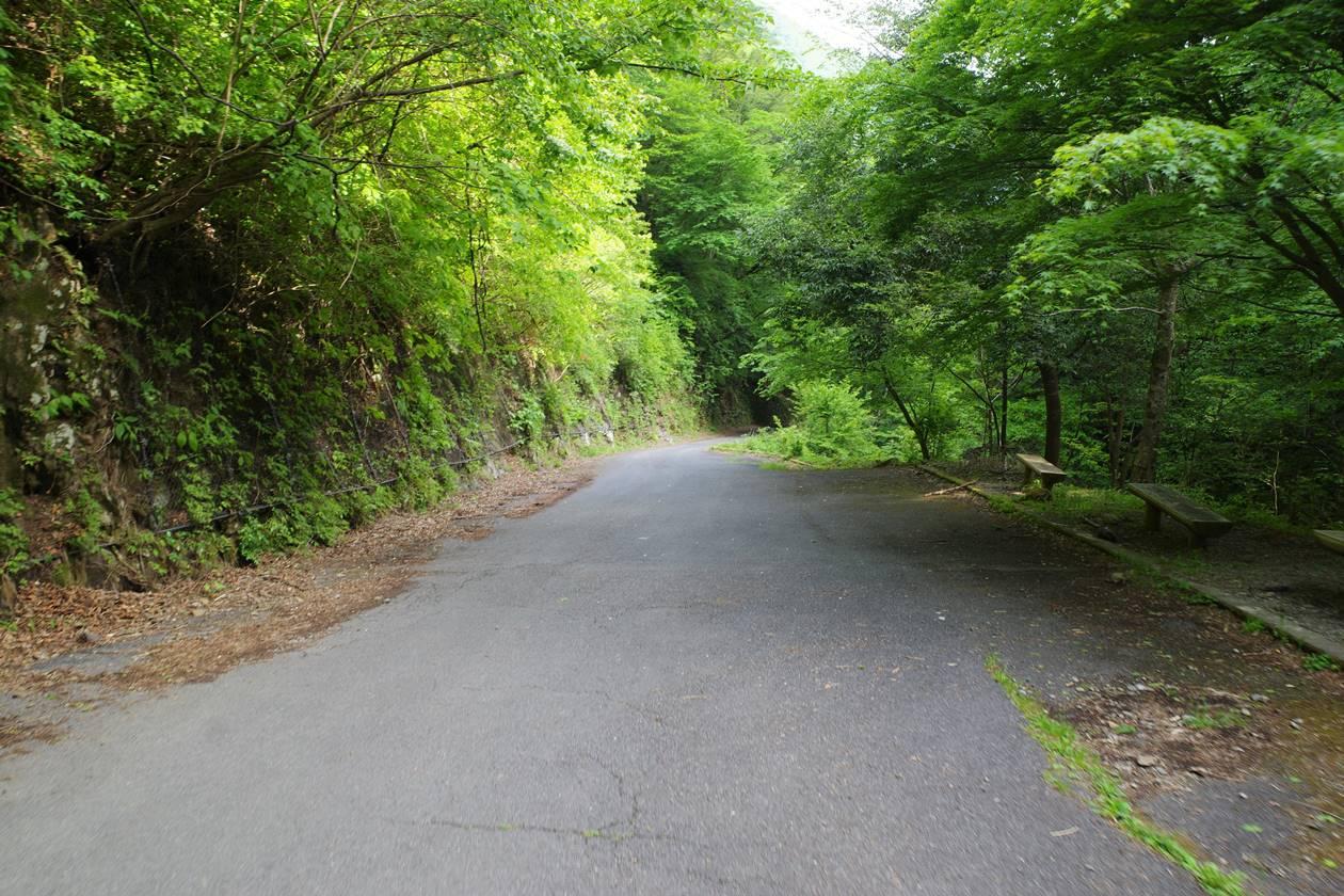 川苔山の林道歩き