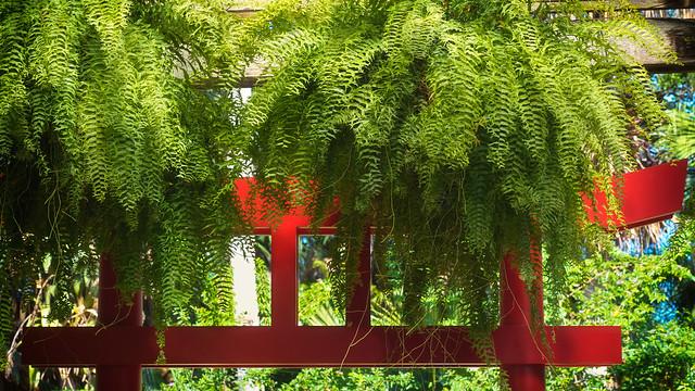 Torii and ferns