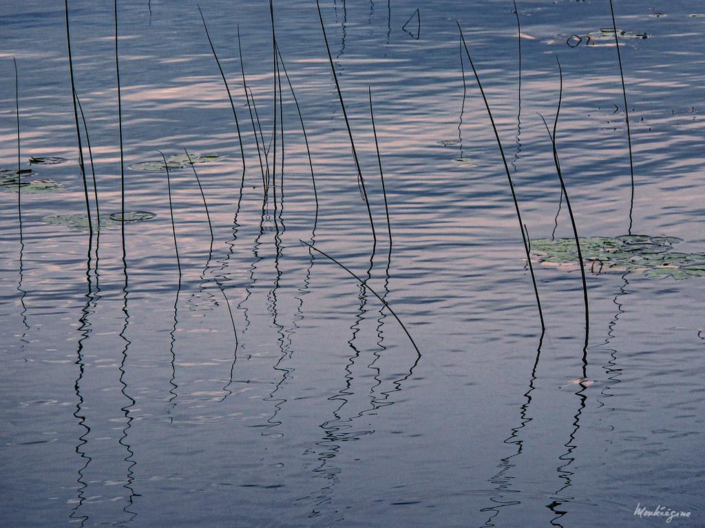 Reflective Reeds - Roseaux en reflets