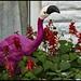 Falmingo amongst the flowers-1=