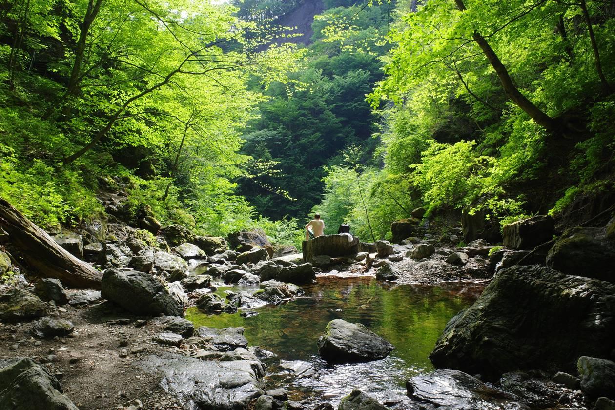 川苔山・百尋の滝と新緑