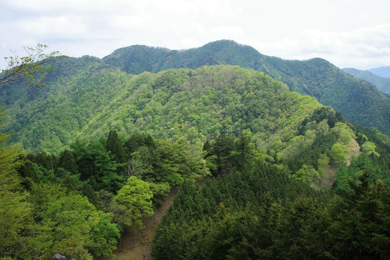 日向沢の峰から川苔山へ