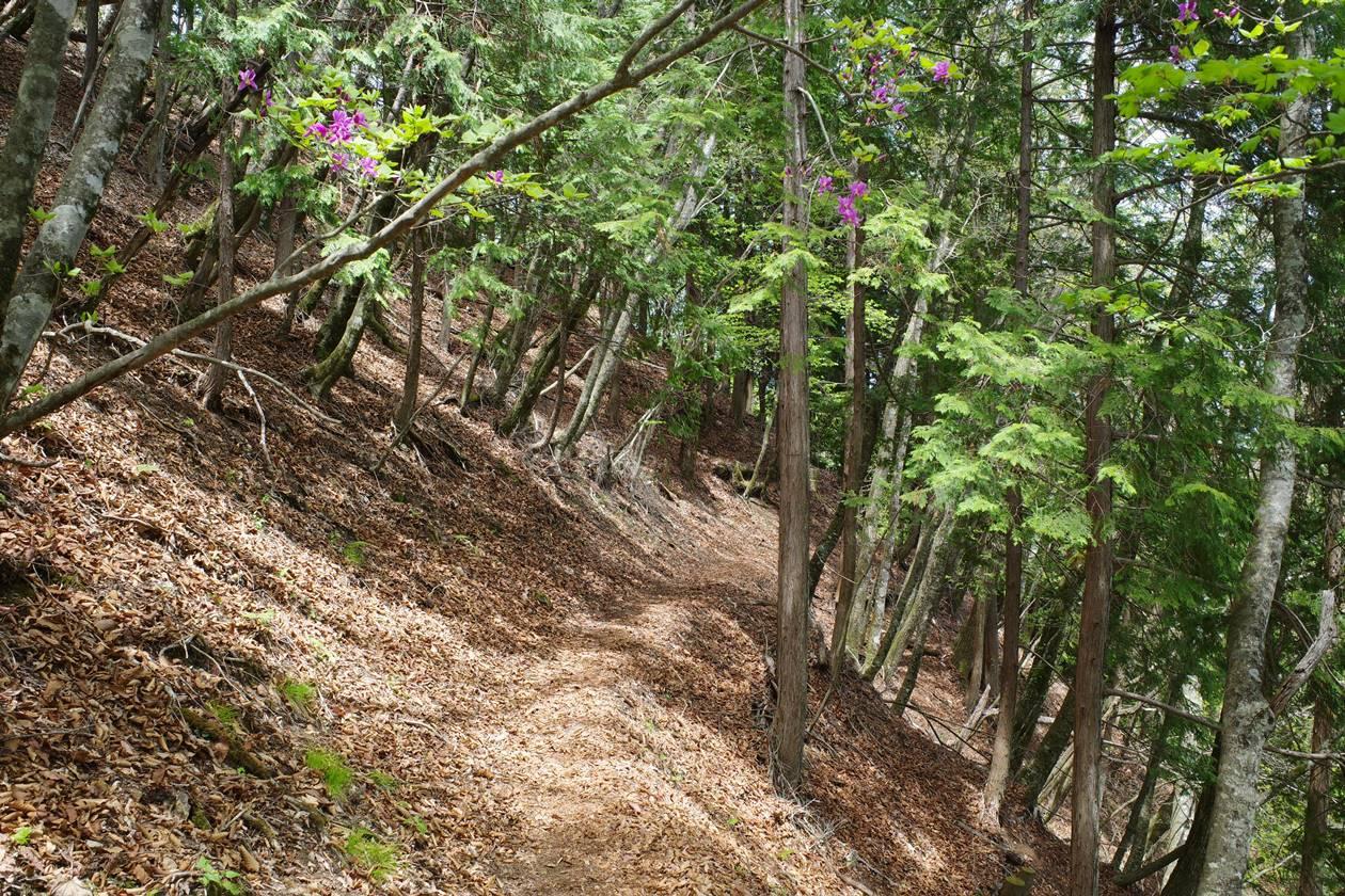 【奥多摩】蕎麦粒山~川苔山 ツツジ咲く日帰り登山