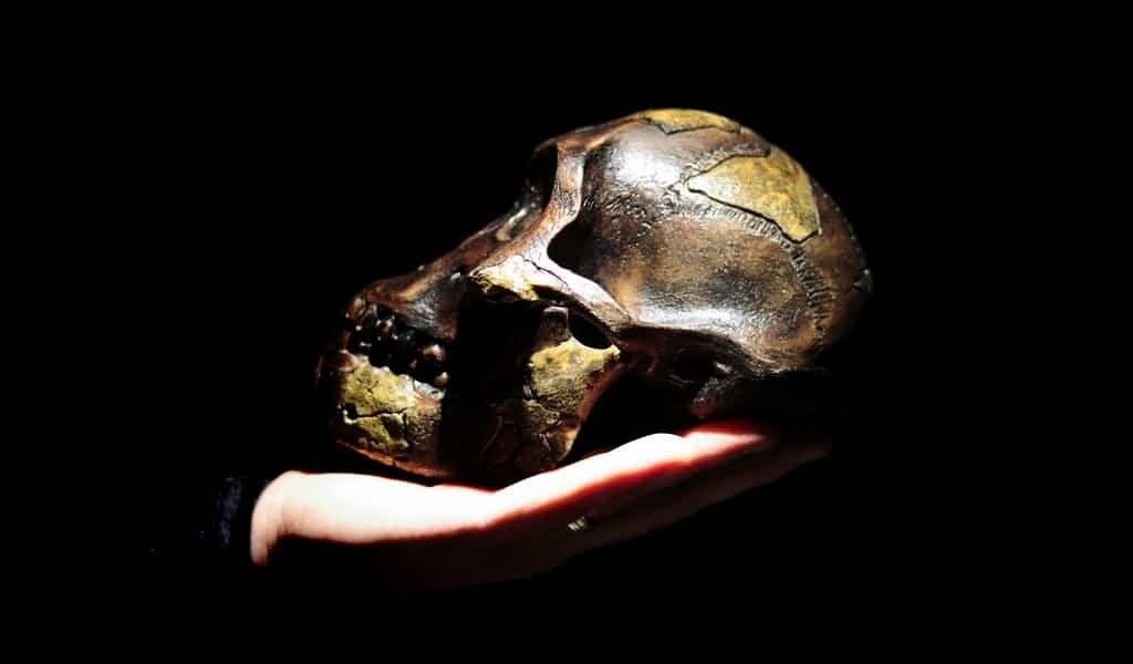 Un ancêtre des Néandertaliens complique l'histoire de l'humanité