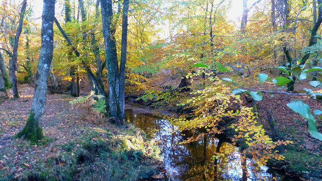 Highland Water, New Forest NP, England