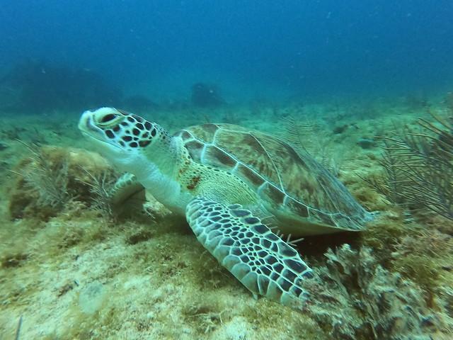 AM 21 AUG 2021 Deep Reef Dive & Benwood Shipwreck