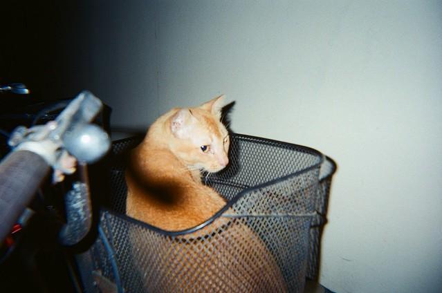 Neighourhood ginger kitty!