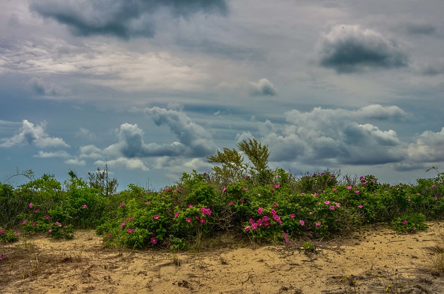 Spring Dunes and Sky [Explore June 25, 2021]
