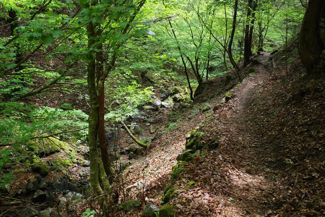 川苔山から百尋の滝へ下山