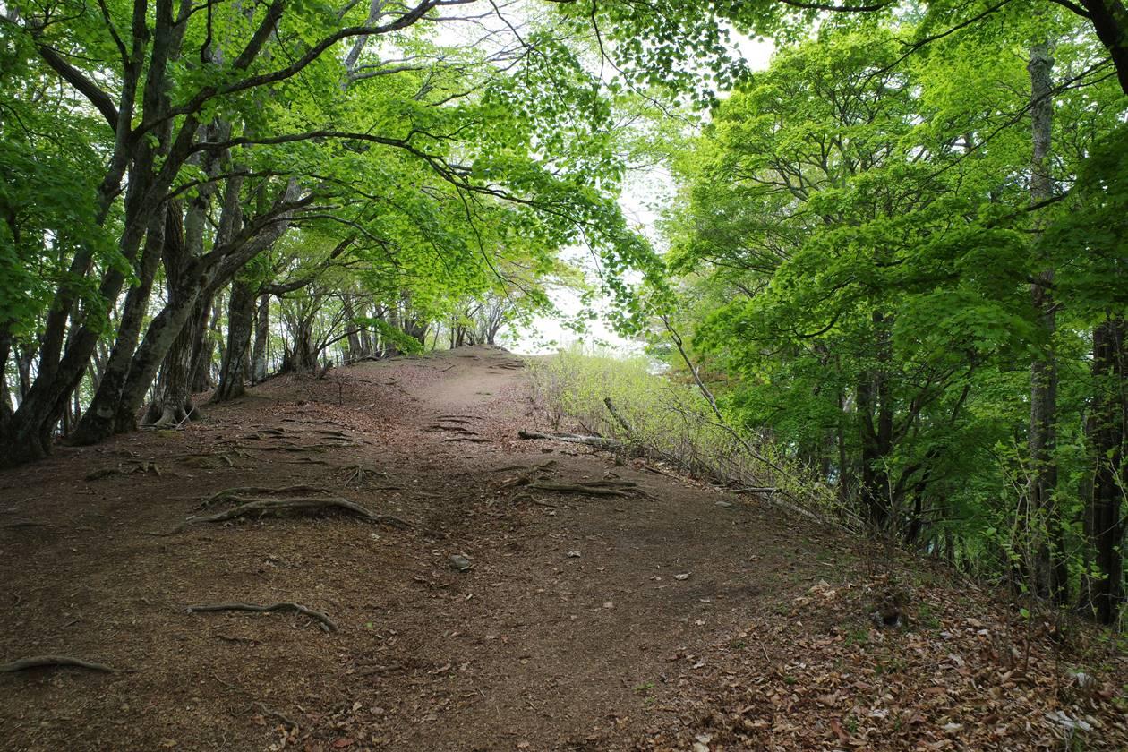 5月新緑の川苔山登山