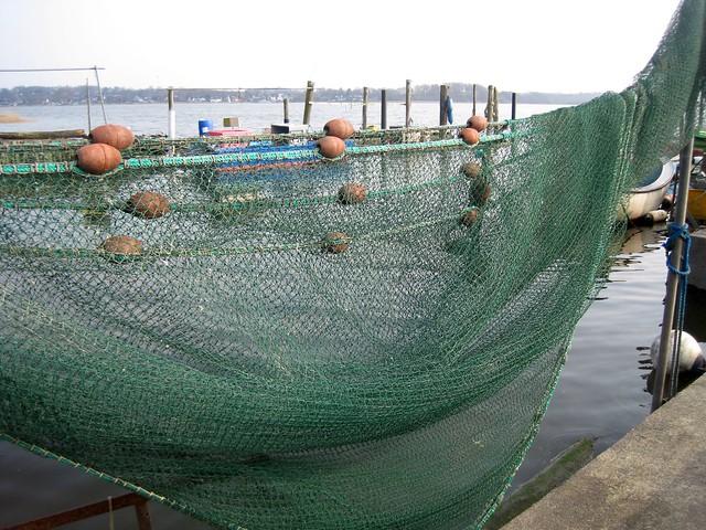 Netze am kleinen Fischerstrand der Schlei am Holm