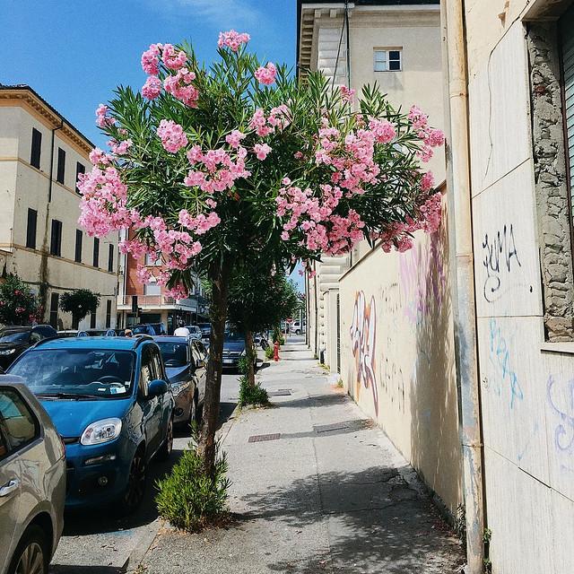 Viareggio, Italy