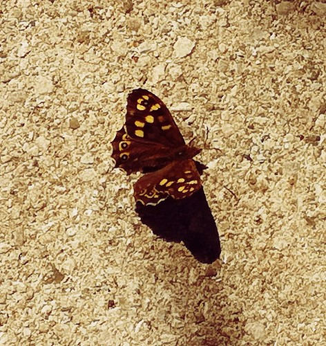 June 2021 Photography Competition - Butterflies and Moths