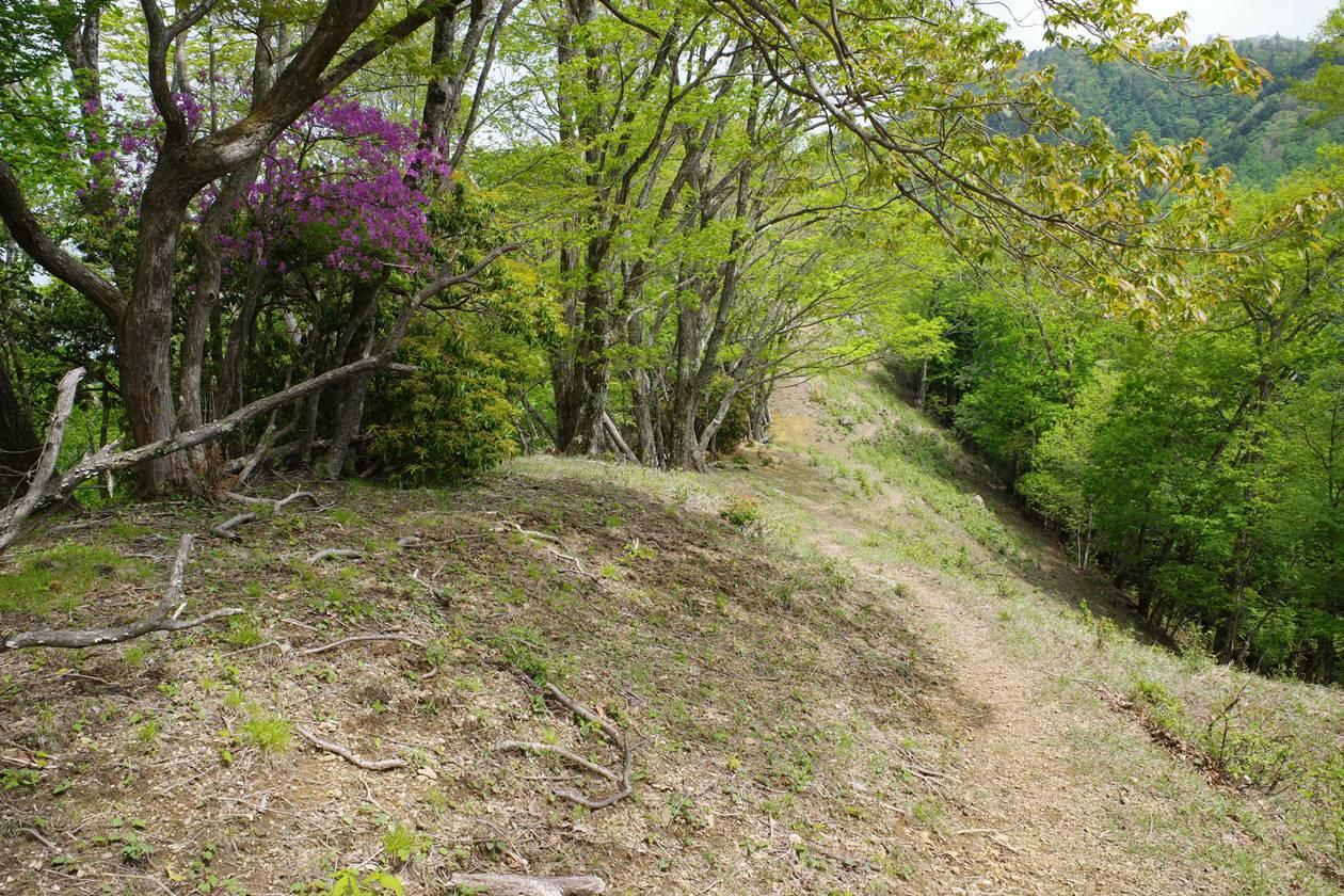 【奥多摩】蕎麦粒山~川苔山 シロヤシオとミツバツツジ満開の登山