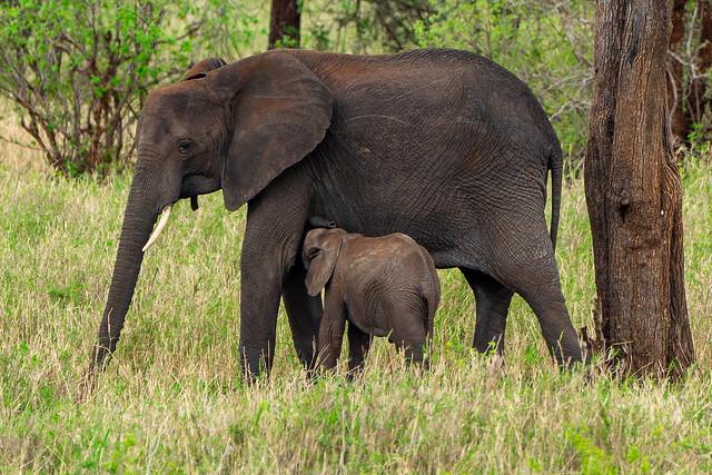 Elephant Mother's love