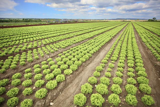 Agriculture à Montesson
