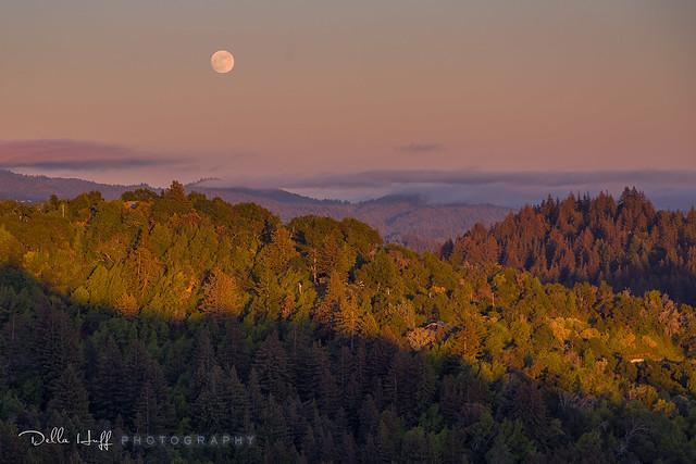 Moonrise Kingdom, Santa Cruz Mountains