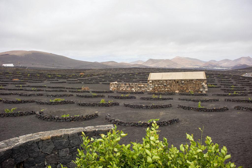 Visita a La Geria en Lanzarote