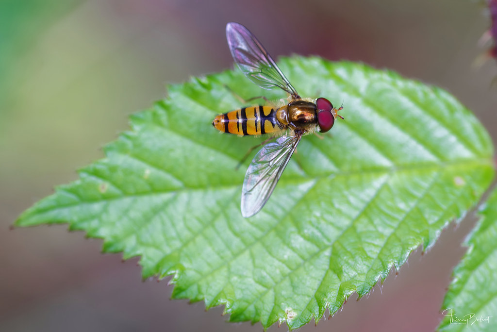 Insecte posé sur une feuille