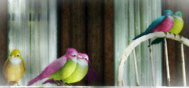 Nelipot 2 - Birds
