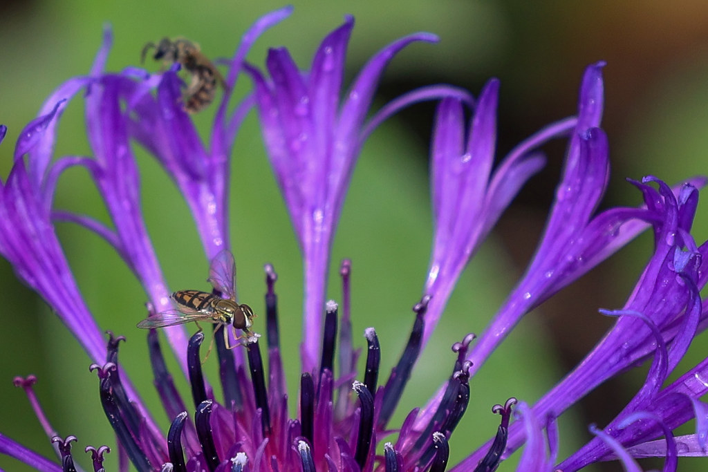 Close up of a small bee