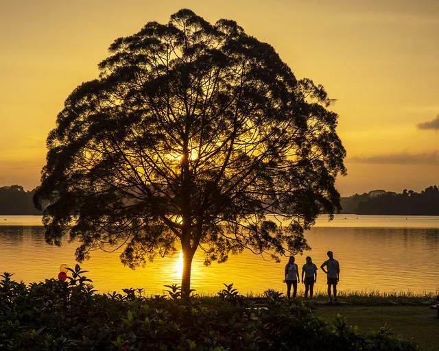 Setting Sun Behind Tree in Upper Seletar Reservoir