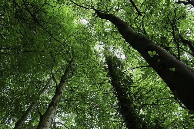 Luscious Green Canopy