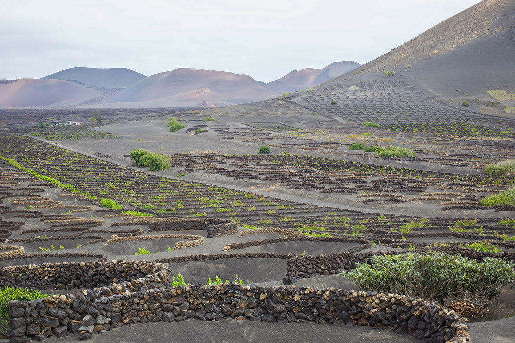 Paisaje protegido de La Geria en Lanzarote