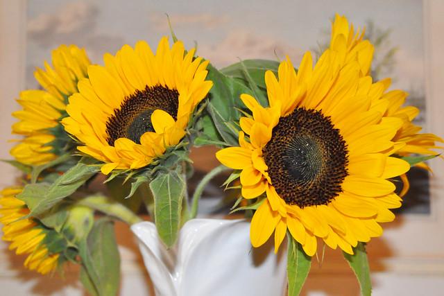 Juni 2021 ... Sonnenblumen in der Vase ... Brigitte Stolle