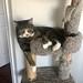 Watson on the cat tree