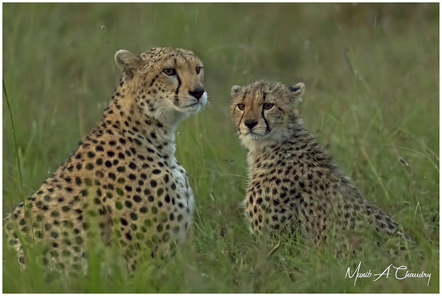 Mamma & her Cub!