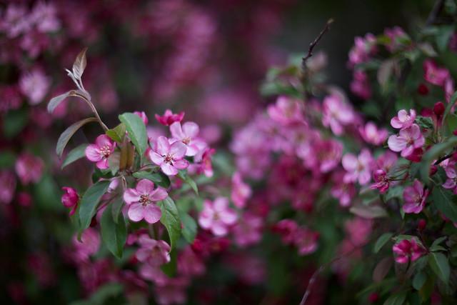 Petites fleurs.