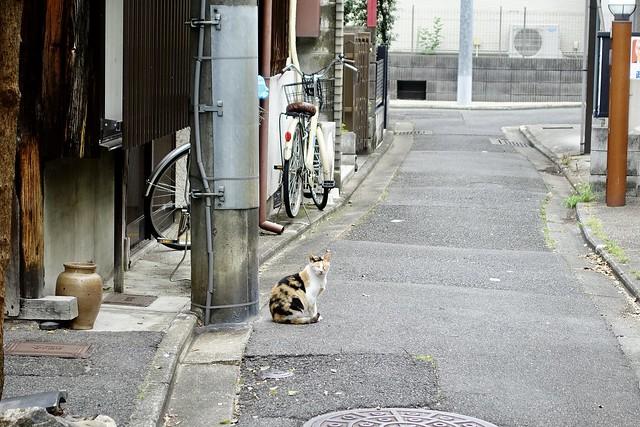 Today's Cat@2021−06−25