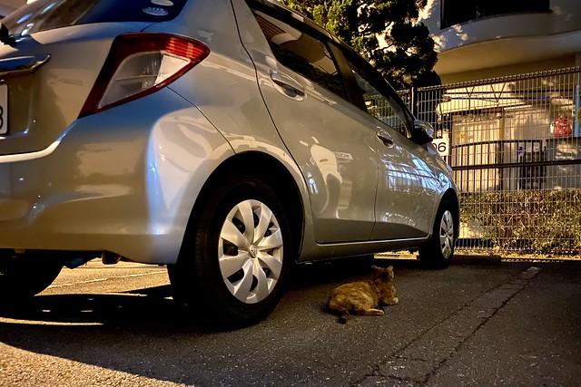 Today's Cat@2021−06−26