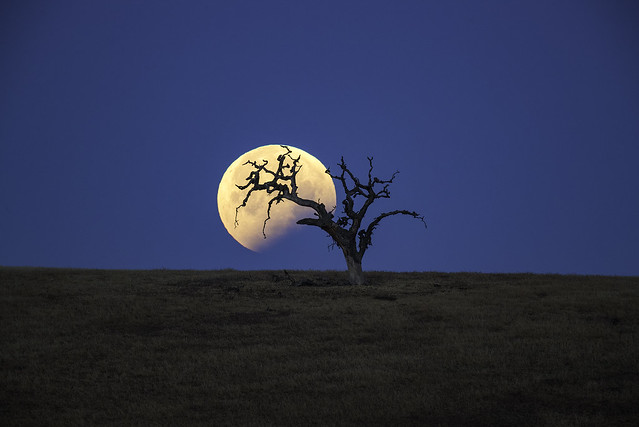 Lunar Eclipse Alignment