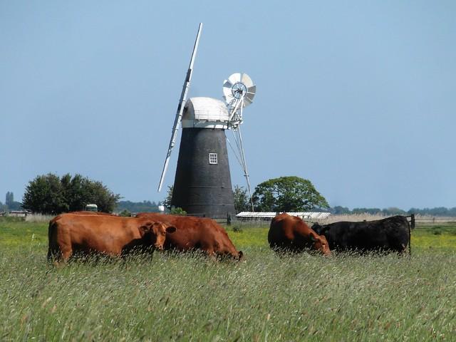 Mutton's Mill, Havergate marshes, Norfolk
