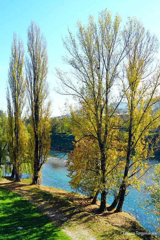 Деревья на берегу Врбаса