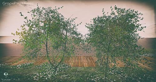 The Little Branch - Grapefruit Tree - UBER