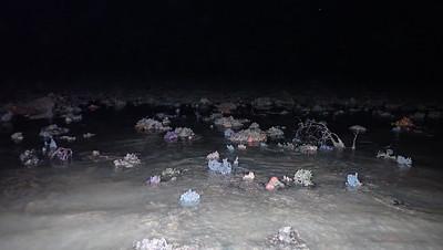 Various marine life on Chek Jawa
