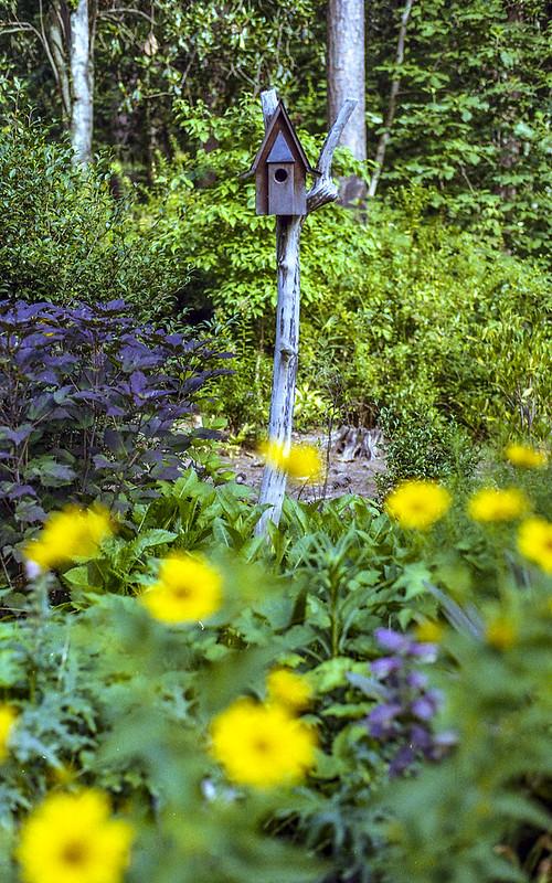 Contax 137 MA Quartz - Zeiss 50mm f/1.7 - Kodak Gold 200