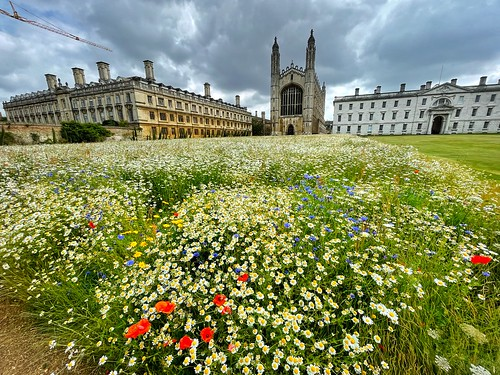 King's College in June